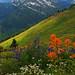 Rolling Mountain Meadow