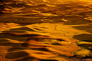 Golden Harvest - The Palouse | by nailbender