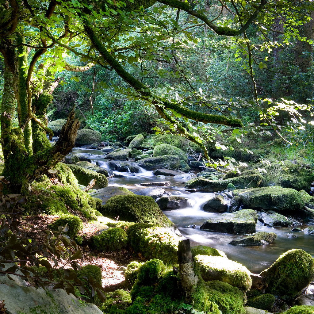 Forest stream | Stream in Killarney National Park. Near ...