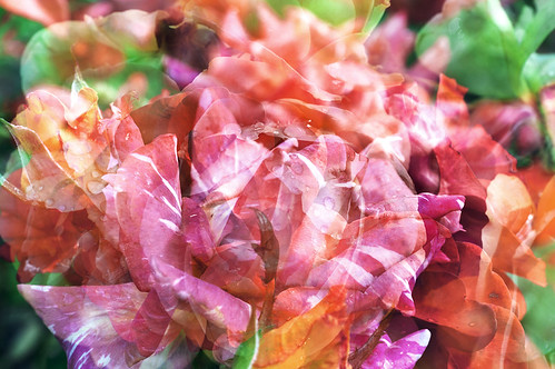 I never promised you a rose garden pekka nikrus flickr - Never promised you a rose garden ...