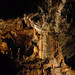 The  mysterious karst cave system at Postojna