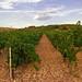 Vineyards (II)