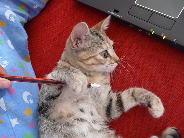 Meo Cat Food Online