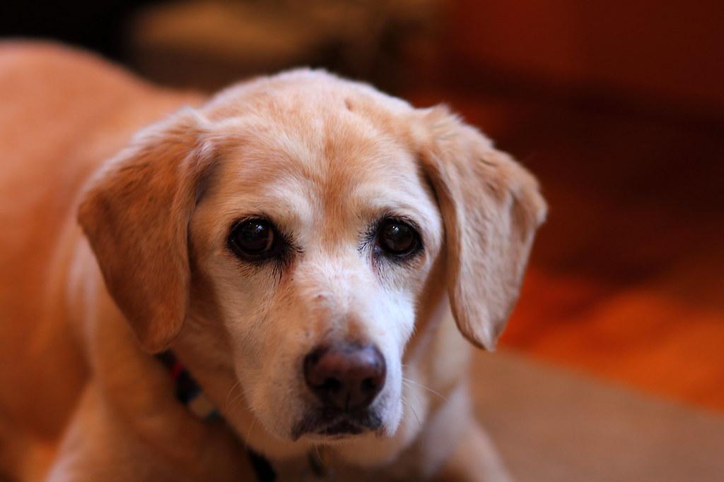 Dog Friendly B And B Somerset