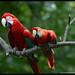 Macaws_Brandywine Zoo_Wilmington,Delaware