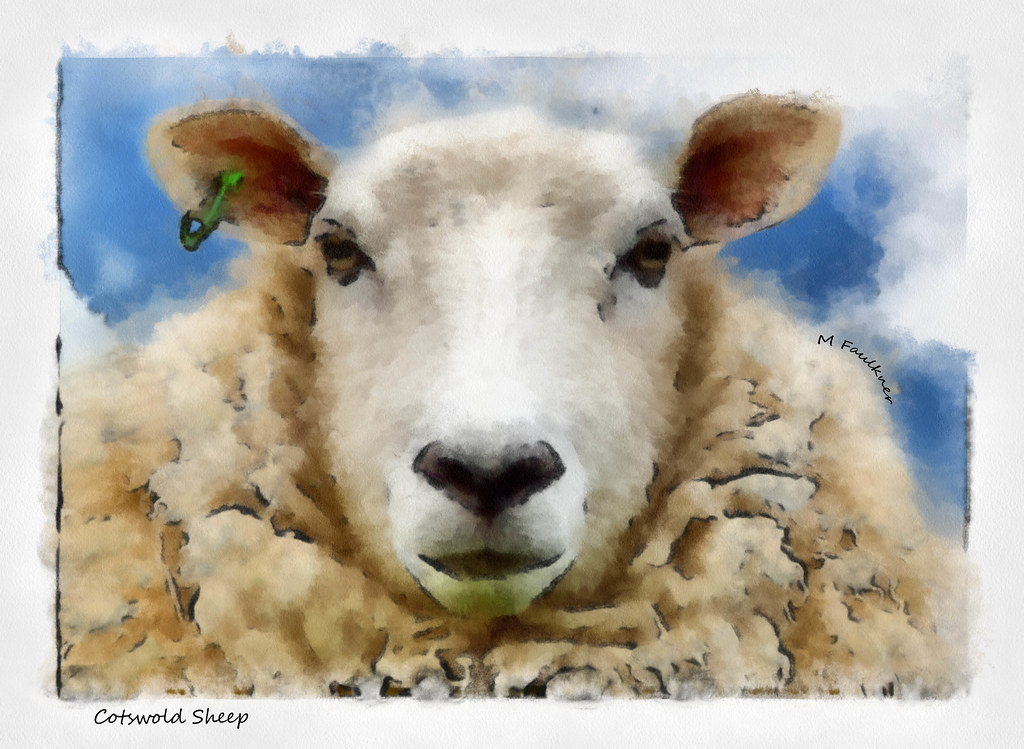 Auto Paint Shop Near Me >> Cotswold sheep painting | I took this picture back in the ...