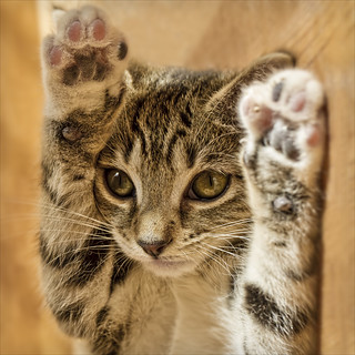 hands up! | by Black Cat Photos