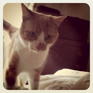 Instragram - my cat | by Célèste of Fashion is Evolution