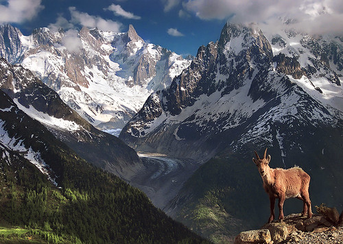 alpine ibex taken with a simple compact max rive photo tours flickr. Black Bedroom Furniture Sets. Home Design Ideas