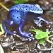 Frogs-cute but dangerous 3