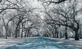 Wormsloe Avenue IR | by Patrick Morris Photography