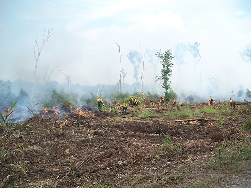 Using fire to fight fire | by U. S. Fish and Wildlife Service - Northeast Region