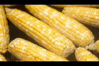 Corn Boil | by Phil Roeder