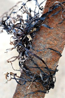 seaweed + rust_010 | by coco knits