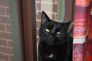 Cat In The Window ~ Blacky..... | by Michelle ~ Blacky ~ Champaz's Captures....