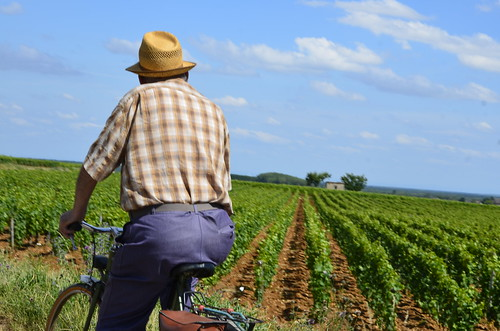 On the way to Harvets - Burgundy Grape Harvest 2011 | by The Hungry Cyclist