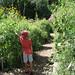 Discovery Garden Wildflower Meadow