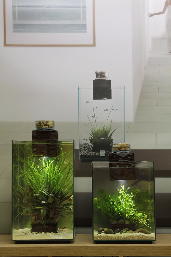 Elegant ... Fluval Chi (19 And 25 Litre) | By George Farmer