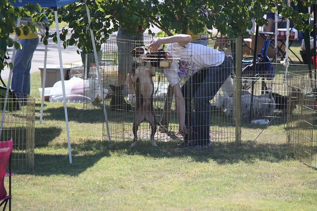 Tulsa Animal Rescue Dogs