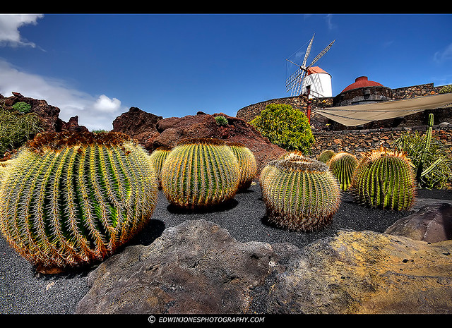 Jardin de cactus lanzarote hdr flickr photo sharing for Jardin cactus lanzarote