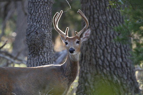 Backlit Buck | by Larry Smith2010