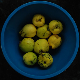 DSC_8645-quince | by wmconnolley
