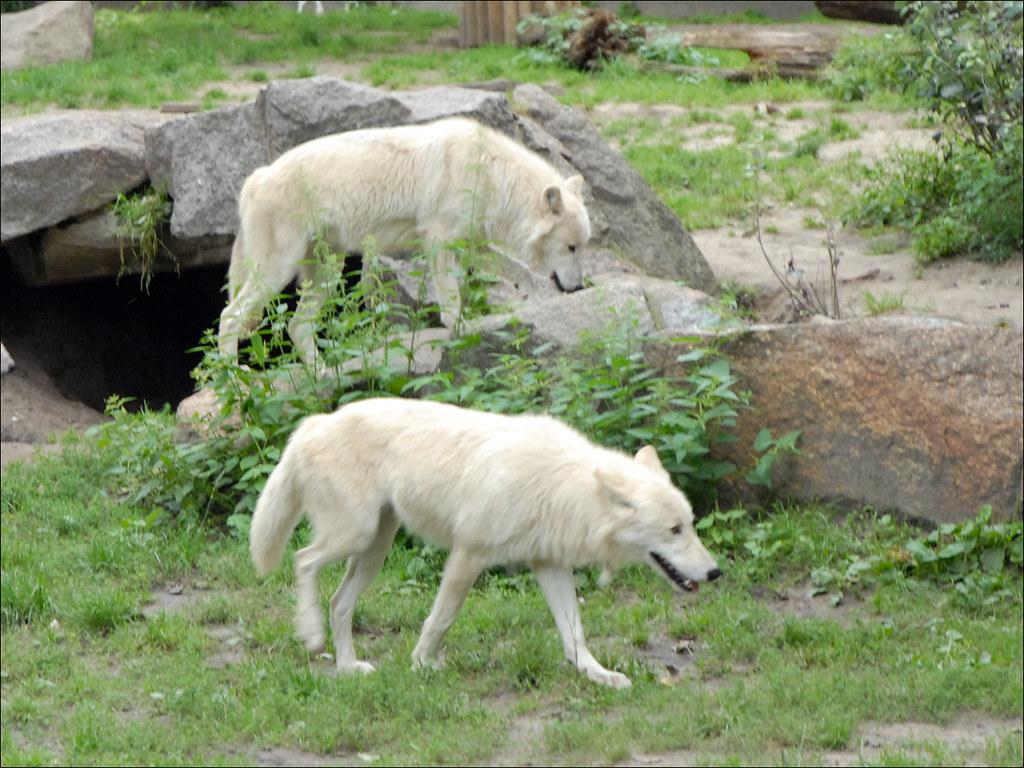 Zoo De Jurques Prend Tickets Restaurants