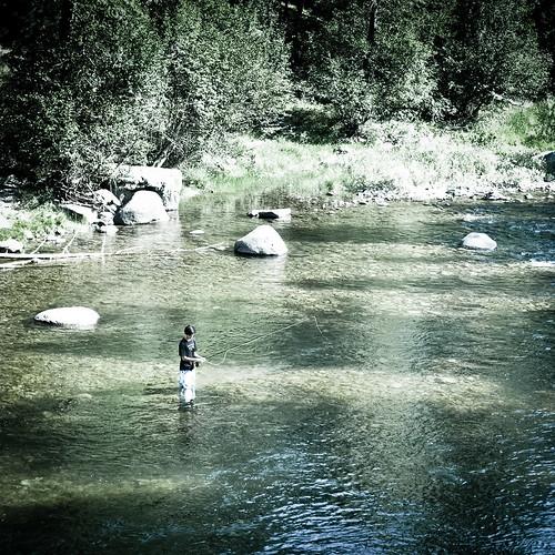 Fly fishing in rock creek location rock creek for Rock creek fishing report