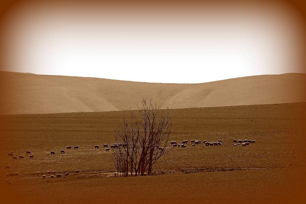 sepia layers landscape