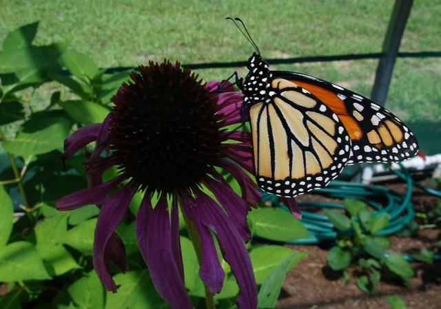 Sarett Nature Center Benton Harbor Michigan
