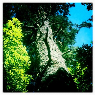 tree | by red alder ranch