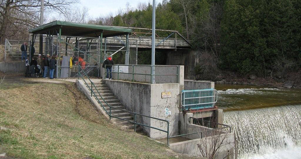 Port Albert Fish Ladder