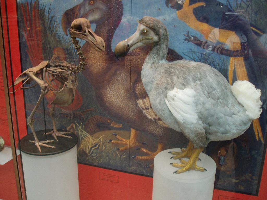Dodo Natural History Museum