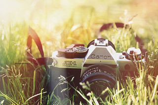 Day 232/365 ~ Take Photographs of What You Want to Take, Not What You Think You Should Take | by Amanda Mabel