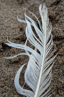 white feather_012 | by coco knits