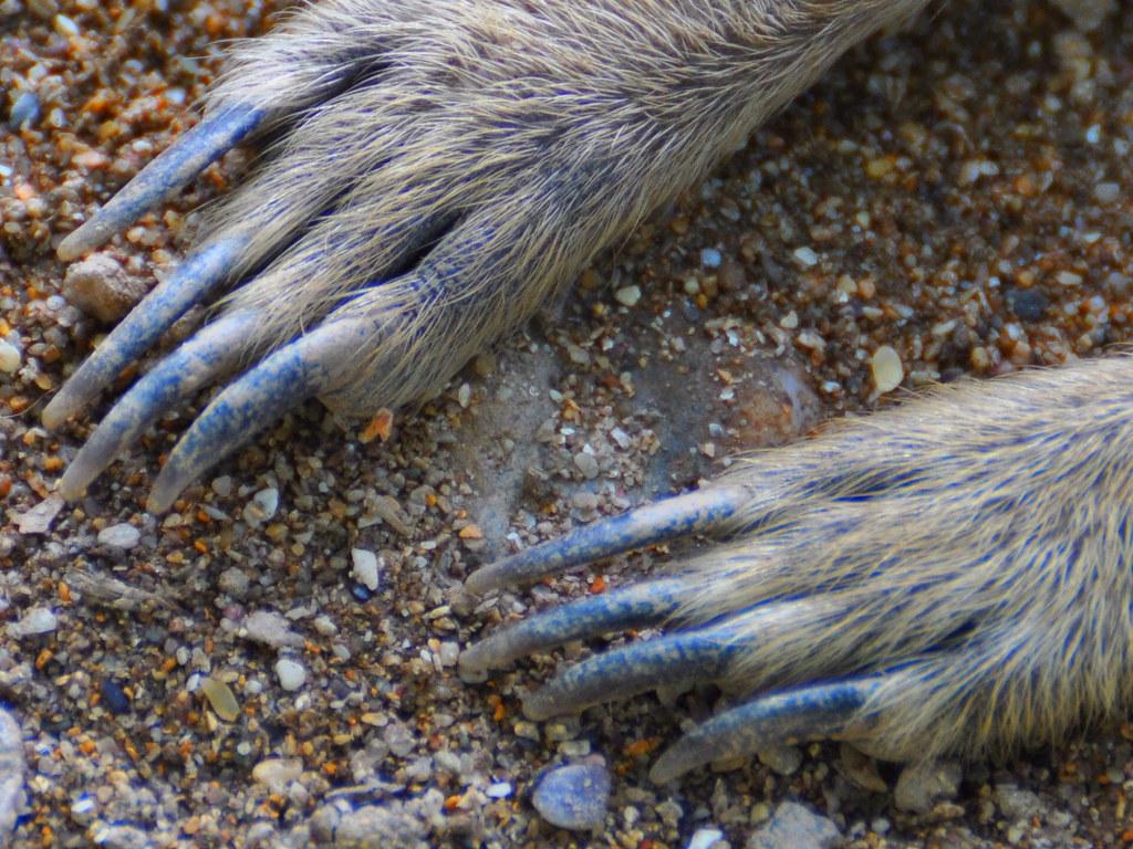 Hind-Foot by Meerkat-Gal on DeviantArt