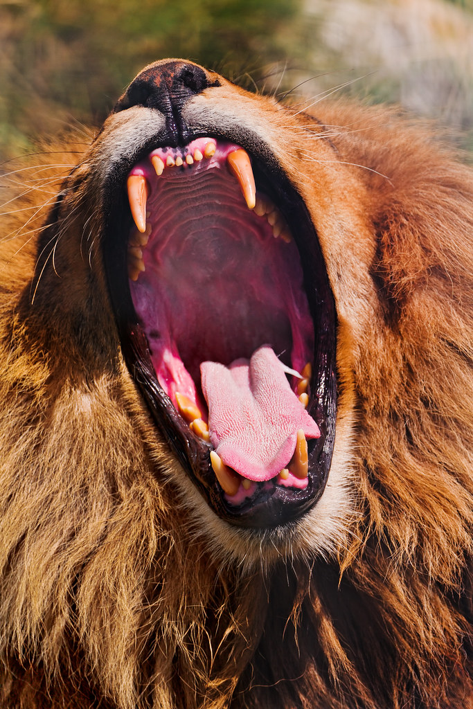 jambo u0026 39 s big mouth