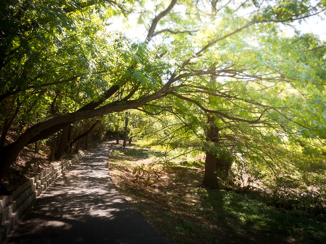 Shoal Creek Trail Canopy Flickr Photo Sharing