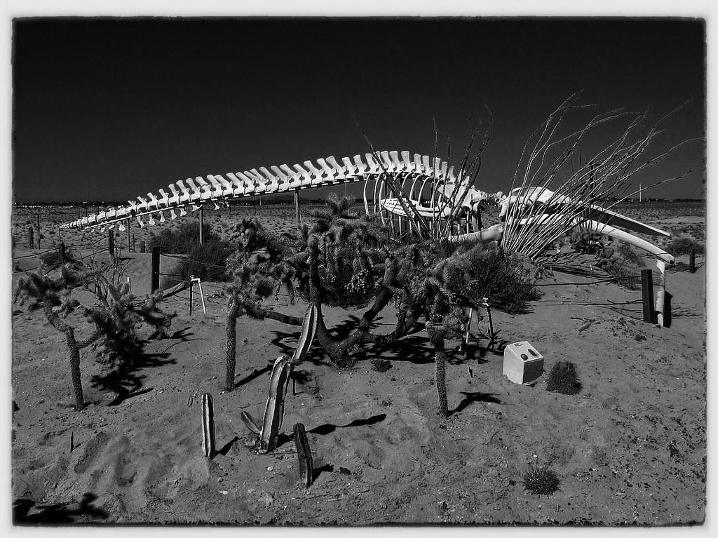 Fin whale bones | CEDO...
