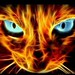 another_fire_cat