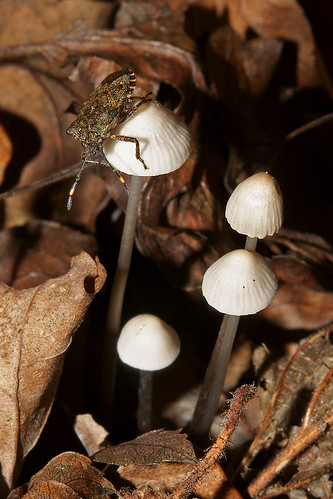 Fungi and Shield Bug | by greggys stuff