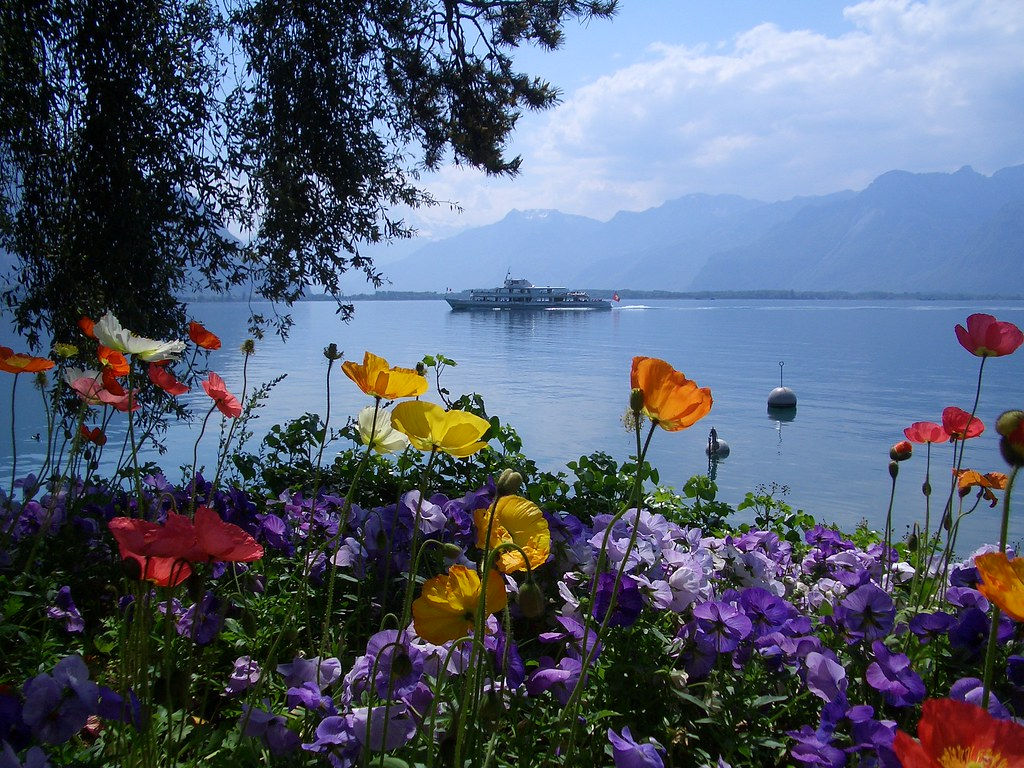 Spring flowers at Lake Geneva | © buzzalps | Buzz Alps ...