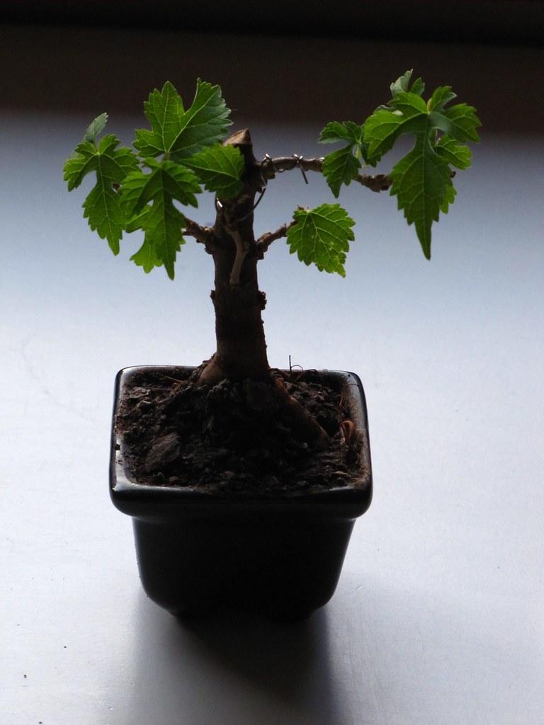 Mini Mulberry Www Youtube Com User Mrthomaseckert Thomas