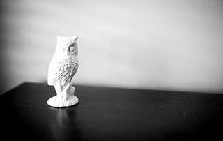 owl | by I Should Be Folding Laundry