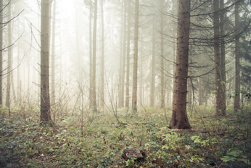 foggy forest part 2 | by STEFFEN EGLY