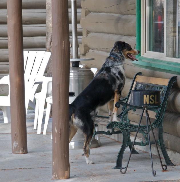 Black Dog Lodge Michigan