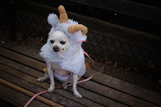 Sheep, Halloween Dog Parade 2011, Tompkins Square Park, East Village, New York City | by Vivienne Gucwa