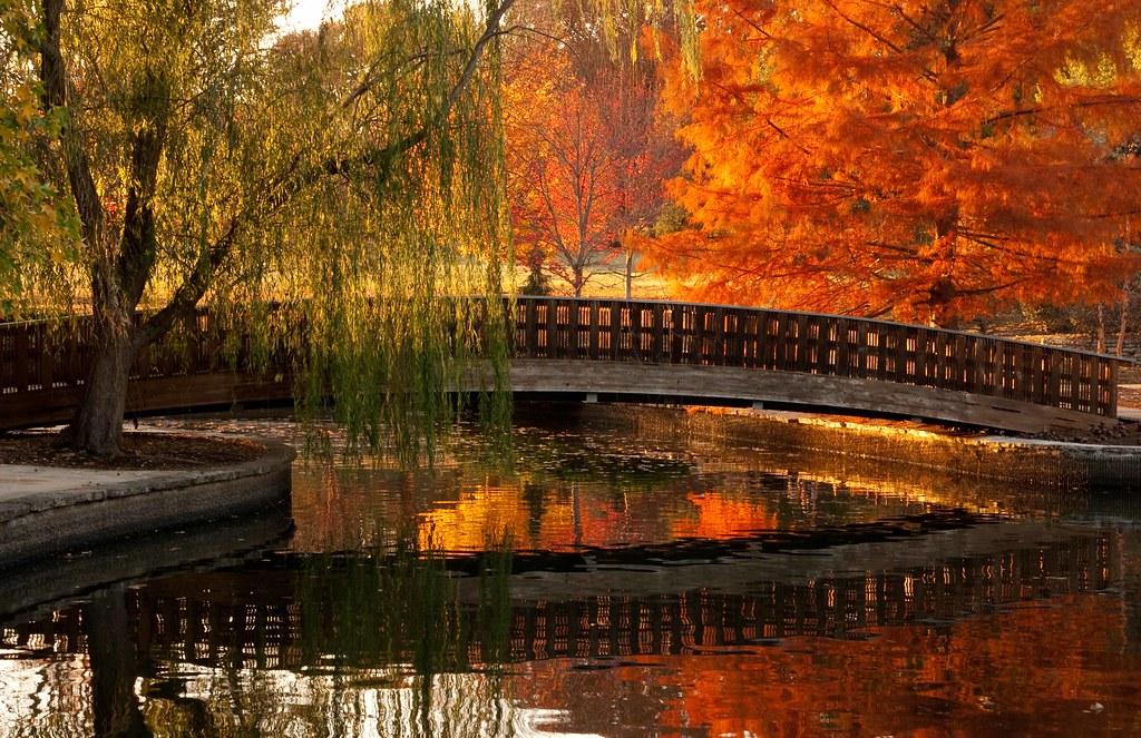 Reflection Of Japanese Bridge At Jacob Loose Park Autumn