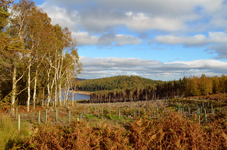 Clearfell and replanting, Langsett Reservoir | by treeblog
