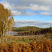 Clearfell and replanting, Langsett Reservoir